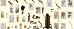 伊藤存と村松美賀子の共著『標本の本 ―京都大学総合博物館の収蔵室から』(青幻舎)