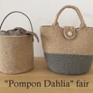 Pompon Dahlia fair