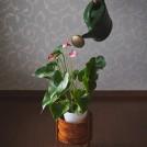 江之子島芸術の日々2019「Plants of Glazed Growth」
